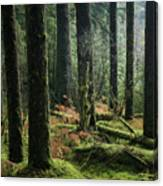 More Tree Trunks And Ferns Canvas Print