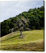 Morgan Territory Oak Canvas Print