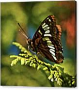 Mormon Metalmark Canvas Print