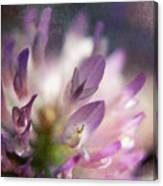 Morning Blossom 2 Canvas Print
