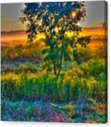 Morning Color-4 Canvas Print