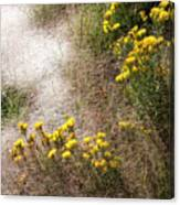 Morning Dew At Pendleton Park Canvas Print
