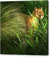 Morning Dew - Florida Panther Canvas Print