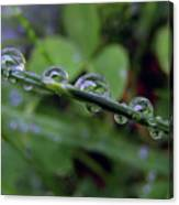 Morning Dewdrops 2 Canvas Print