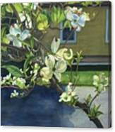 Morning Dogwood Canvas Print