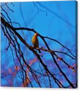 Morning Finch Canvas Print