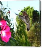 Morning Glories And Humming Bird Canvas Print