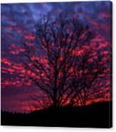 Morning Glory 1 Canvas Print