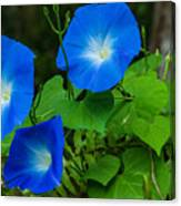 Morning Glory Family Canvas Print