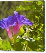 Morning Glory I Canvas Print