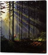 Morning Glow In The Forest Canvas Print