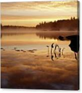 Morning Gold Canvas Print