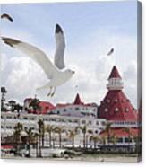 Morning Gulls On Coronado Canvas Print