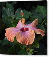 Morning Hibiscus Canvas Print