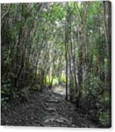 Morning Hike On Waihee Canvas Print
