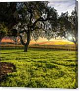 Morning In Wine Country Canvas Print