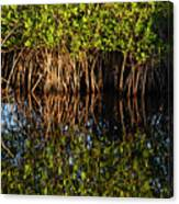 Morning Light Mangrove Reflection Canvas Print