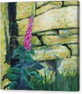 Morning Light On A Foxglove Canvas Print