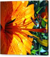 Morning Lily Canvas Print