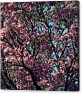 Morning Lit Magnolia Canvas Print