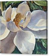 Morning Magnolia Canvas Print