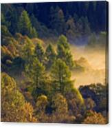Morning Mist In The Trossachs Canvas Print