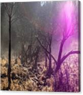 Morning Misty Flare Canvas Print