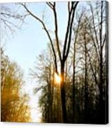 Morning Mood In The Forest Canvas Print