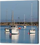 Morning On Morro Bay B3984 Canvas Print