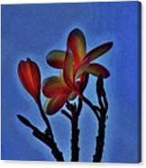 Morning Plumeria Canvas Print