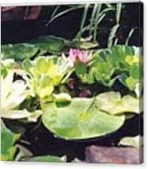 Morning Pond Canvas Print