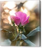 Morning Rose Canvas Print