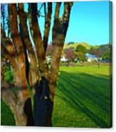 Morning Shadows In Waimea Canvas Print