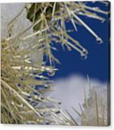 Morning Snow On Cactus Spines #1 Canvas Print