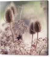 Morning Softness. Wild Grass Canvas Print