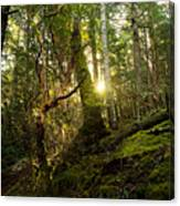 Morning Stroll In The Forest Canvas Print
