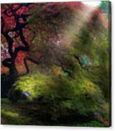 Morning Sun Rays On Old Japanese Maple Tree In Fall Canvas Print
