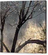 Morning Sunlight Mist Canvas Print
