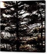 Morning Sunlight Through The Pines Canvas Print
