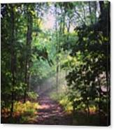 Morning Sunshine On The Appalachian Trail Canvas Print