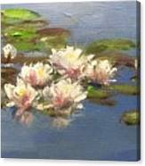 Morning Water Lilies Canvas Print