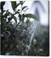 Morning Web With Dew Canvas Print