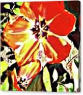 Moro Bright Canvas Print
