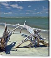 Morris Island Driftwood Canvas Print