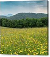 Moses Cone Meadow Canvas Print