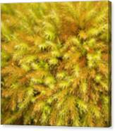 Moss Abstract Canvas Print