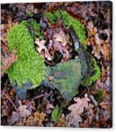 Moss And Leaves Canvas Print