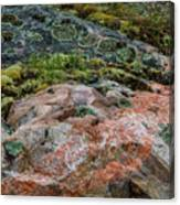 Moss And Lichen Abstract Canvas Print