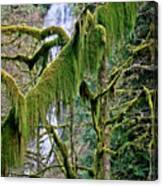 Moss At Munson Creek Canvas Print
