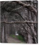 Moss Beach Trees 4191 Canvas Print